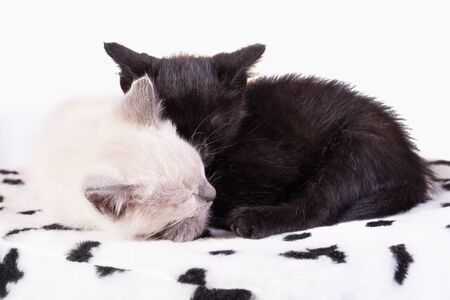 Two kittens sleep soundly, huddled together. Banco de Imagens