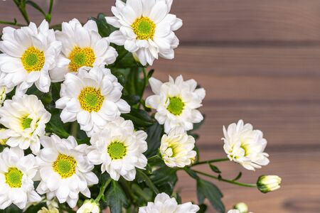 A bouquet of white bush chrysanthemums on a wooden table. View from above, brown table, free seat on the right 写真素材