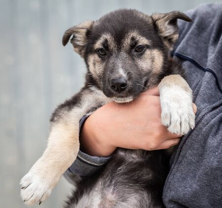 A homeless puppy of a large dog in the caring hands of a man. Cute puppy in women's hands on the street. Close-up, selective focus
