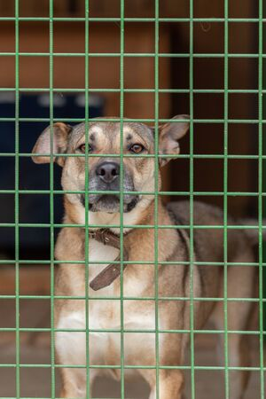 Non-breeding dogs in a cage in a shelter. Homeless animals are treated and found new owners in the shelter