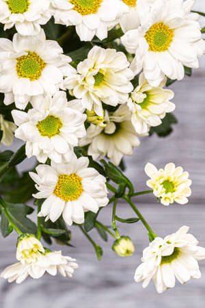 A bouquet of white bush chrysanthemums on a gray background. Close-up, selective focus 写真素材