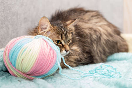 Fluffy breedless cat lies next to a large tangle of wool. Colorful threads of pastel flowers, close-up, selective focus
