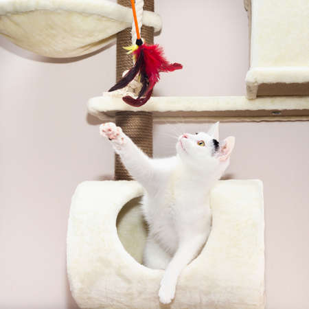White breedless cat plays on the complex for cats Banco de Imagens
