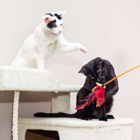 Two cats play on a special game complex for cats. Stock fotó