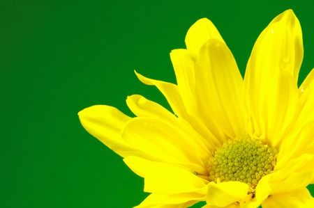 Yellow Flower With Green Background. photo
