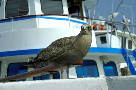 Pirched Seagul Stock Photo - 241191