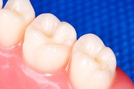 molares: Macro de fotos de dientes y molares.