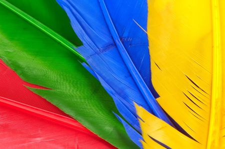 Red, Green, Blue and Yellow Feathers.