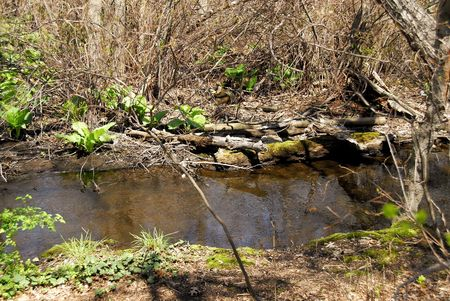 Photo of a Stream Stock Photo - 386924