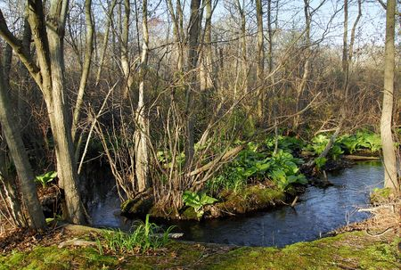Photo of a Forest With a Brook Stock Photo - 386908