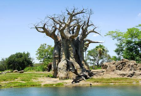 Photo of an Odd Looking Tree