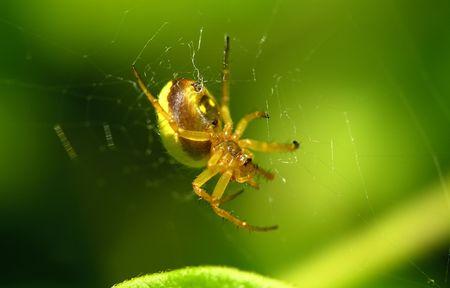 Photo of a Spider Banco de Imagens
