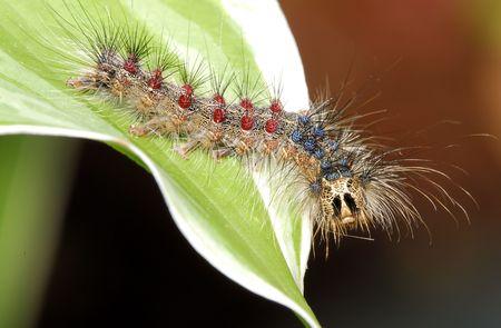 Macro Photo of a Caterpillar