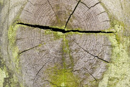 Decaying Wood Background