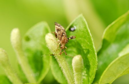 Photo of a Bug