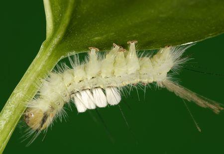 Photo of a Caterpillar