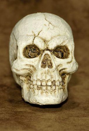 Foto van een schedel