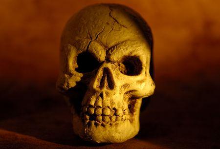 Foto de un cráneo Foto de archivo - 516150