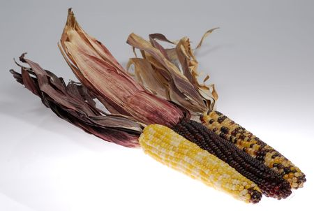 Photo of Corn - Thanksgiving  Fall Related Stock Photo