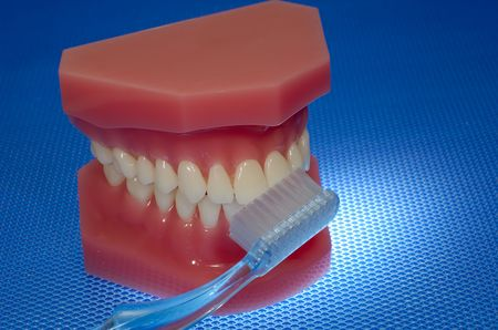 Photo of a Mouth Model and a Toothbrush - Oral Health Related Stock Photo