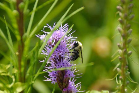 関連、花の季節にミツバチの写真