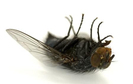 その背面 - 関連の昆虫ハエの写真