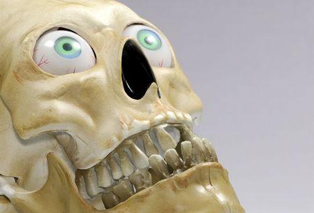 Photo of a Skull - Halloween Decoration Stock Photo - 1769863