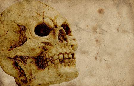 jawbone: Photo of a Skull - Halloween Background