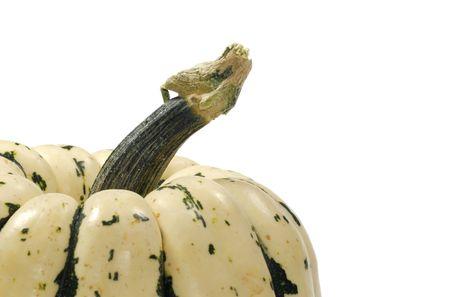 Photo of Pumpkin / Squash Stem - Seasonal - Background