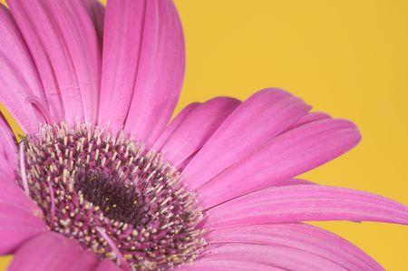 Fondo De la Flor Foto de archivo - 1849136