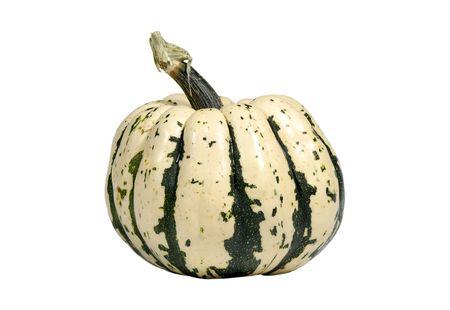 Photo of a Pumpkin / Squash - Fall Related