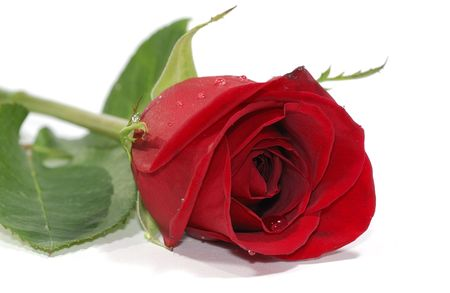 Photo of a Red Rose - Florist Related