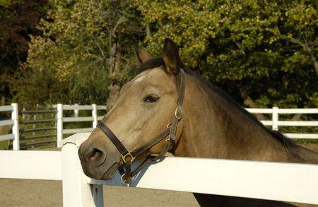 Foto de un caballo - Horse Ranch  Foto de archivo - 1861382