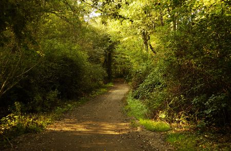 Foto de una ruta en un Bosque - Ruta Footing Foto de archivo - 1861391