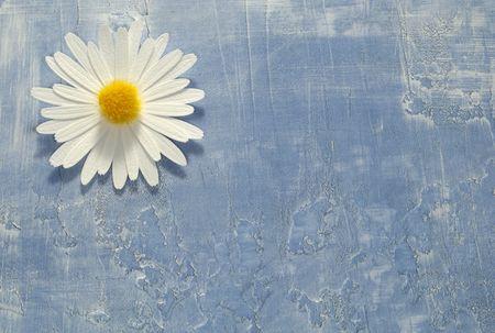 Foto de una flor de papel en un documento de antecedentes - Antecedentes y textura  Foto de archivo - 1861395