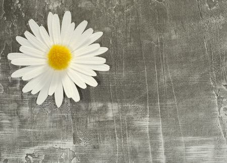 Photo of a Paper Flower on a Paper Background - Background / Texture Stockfoto