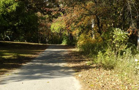 Photo of a Jogging Path in a Park - Outdoors Related