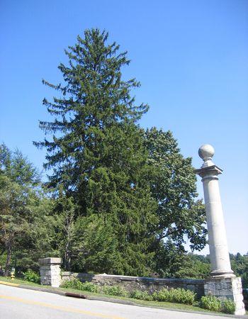 Tall evergreen tree with marble pillar Banco de Imagens