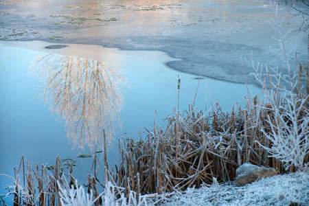 pflanzen: For half frozen lake or pond in winter with a reflection of trees. On the bank covered with hoarfrost, frozen stiff reeds. Stock Photo