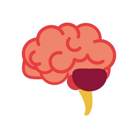 cerveau, organes internes, anatomie, partie du corps, système nerveux, illustration vectorielle, dessin animé, plat, conception, clipart Vecteurs