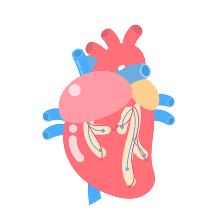 medical internal organs body part nervous system anatomy surgery human heart  health care logo label icon ,flat vector illustration cartoon design clip art
