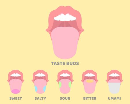 oral, mouth, tongue, taste buds, internal organs anatomy body part nervous system, vector illustration cartoon flat design clip art