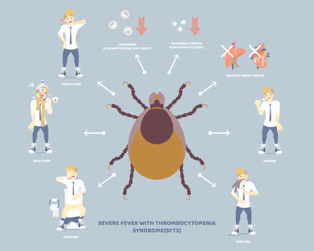 severe fever with thrombocytopenia syndrome (sfts) with tick and symptoms concept, flat character design clip art vector illustration cartoon sign Ilustração