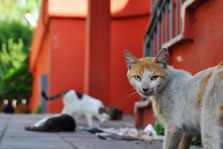 stray: Stray cat in Istanbul Stock Photo