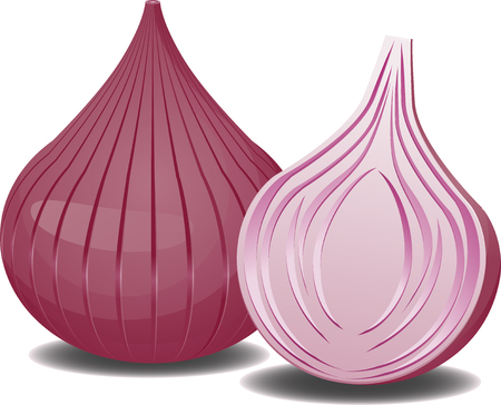 onions: Two onions Illustration