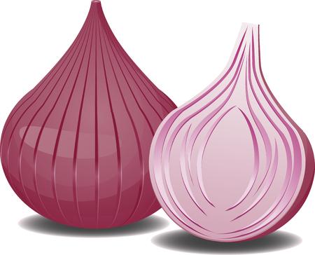 onions: Two onions Illustration