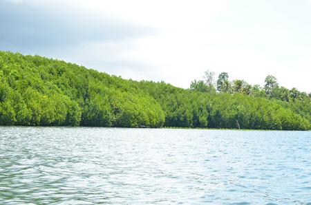 mangroves: Mangroves in the ocean in Philippine photo Stock Photo