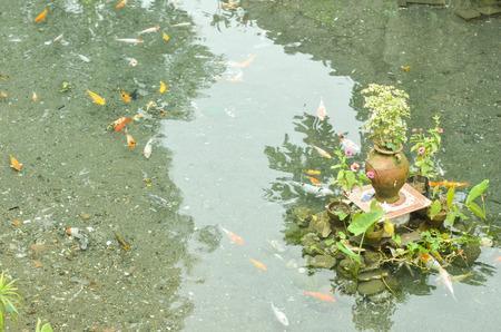 koi: Koi or carp fish pond with flower pot decor photo Stock Photo
