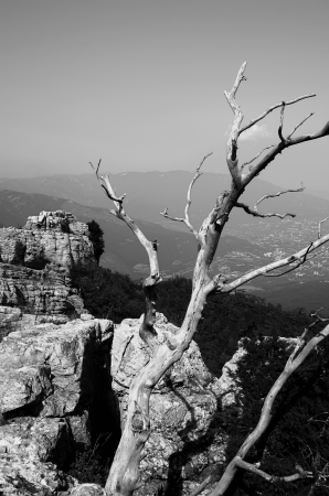 Tree on the top of the mountain photo