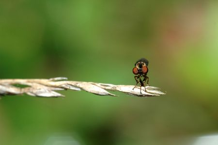 assasin: Robber fly - This picture was taken in Sterling VA. Stock Photo